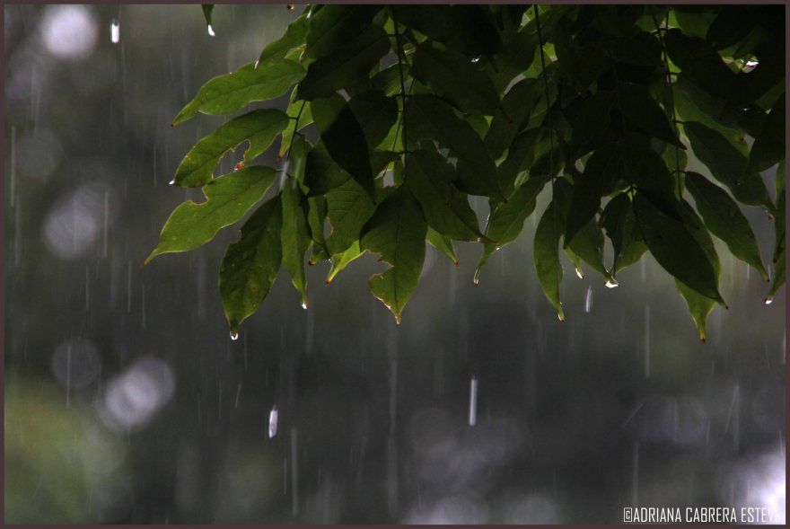 Domingo de lluvia
