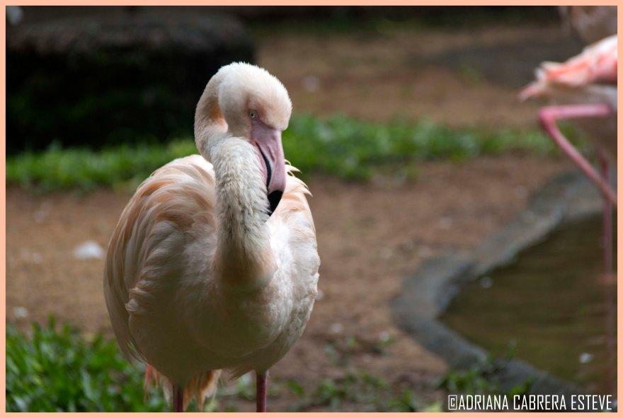 Parque de las Aves - Flamencos1