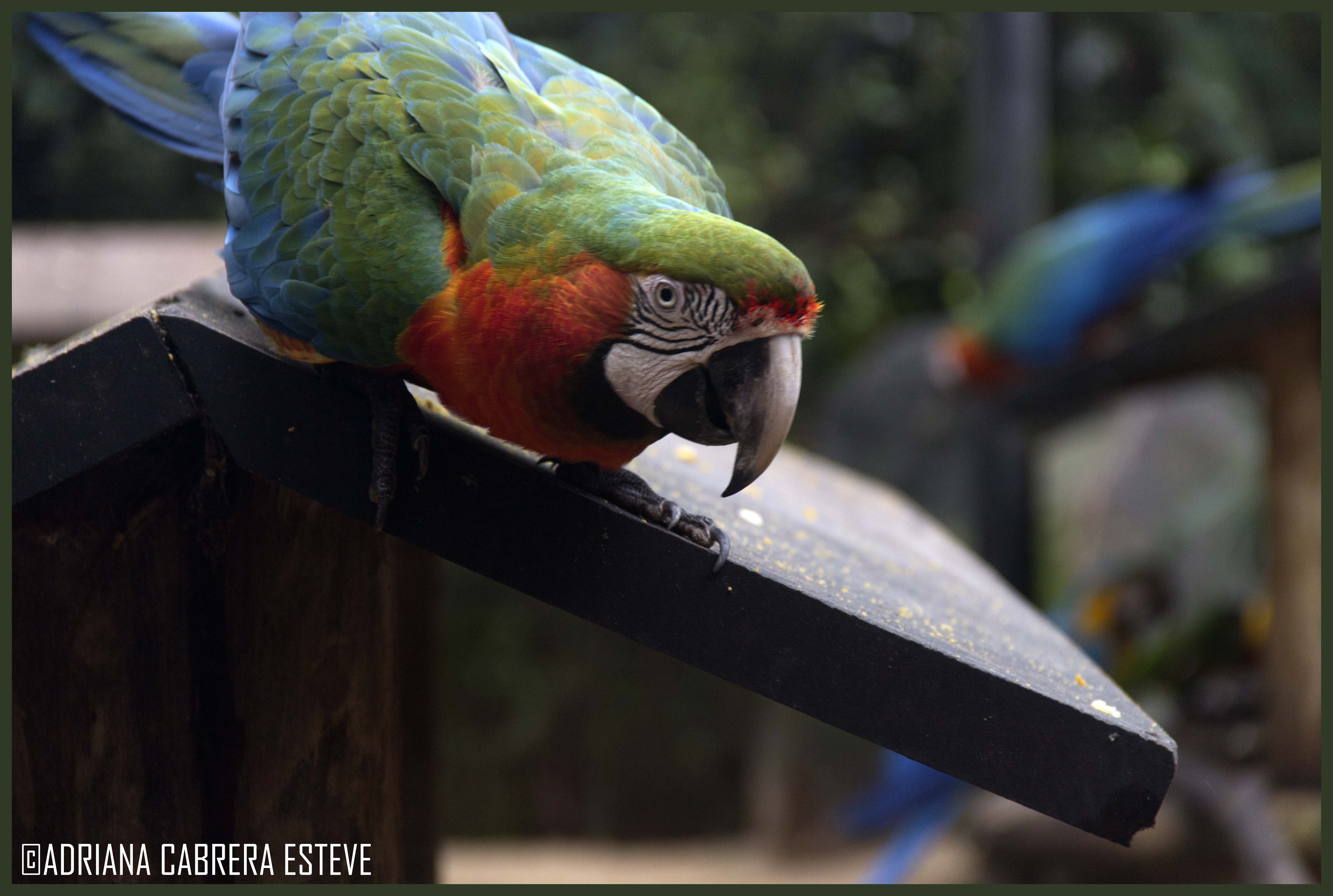 Parque de las Aves - Guacamayos2