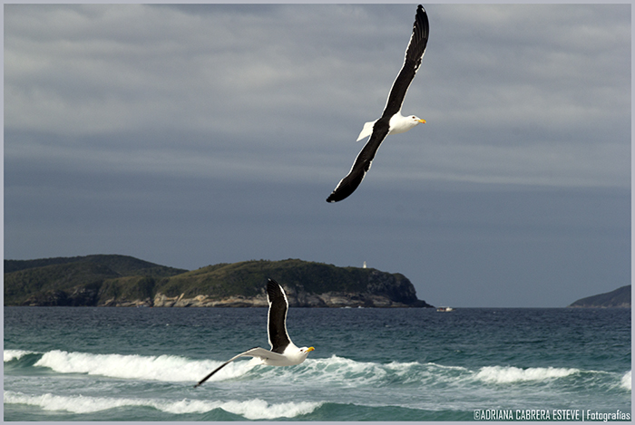 Cabo Frío pesca IV