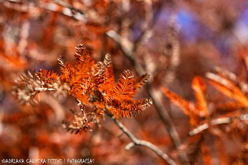 Los colores de mi otoño