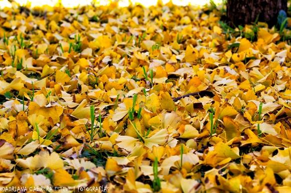 Los colores de mi otoño1