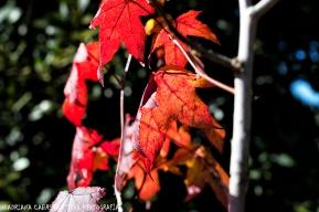 Los colores de mi otoño2
